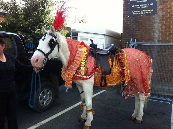 The Asian Wedding Horse Company - White Horse for Asian Wedding Entrance