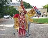 The Asian Wedding Horse Company - White Horse for Asian Wedding Entrance